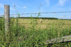 Strained Wire Fencing Somerset Rural Training