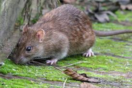 Vermin and pest control Somerset Rural Training